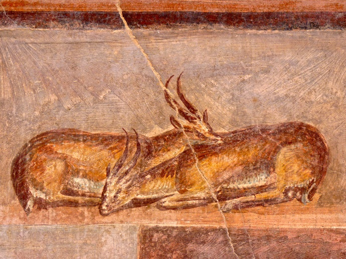 Casa Dei Dioscuri Antelopes and Still Life in Situ North Wall 2