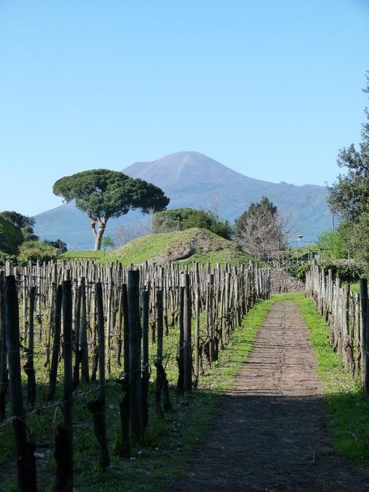 The Vinyard & Vesuvius 2