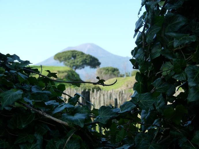 The Vinyard & Vesuvius