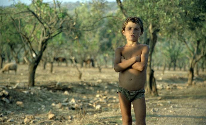 Albanian Shepherd Boy 2