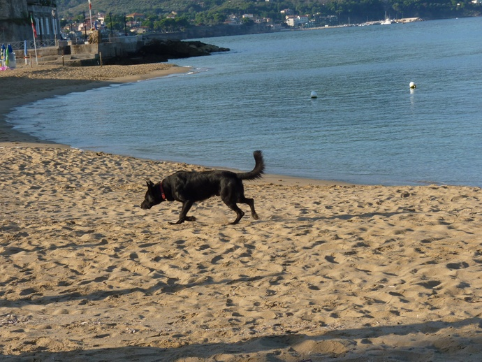 Black Beach Dog