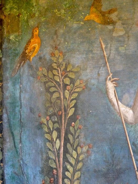 Casa Della Venere in Conchiglia 11