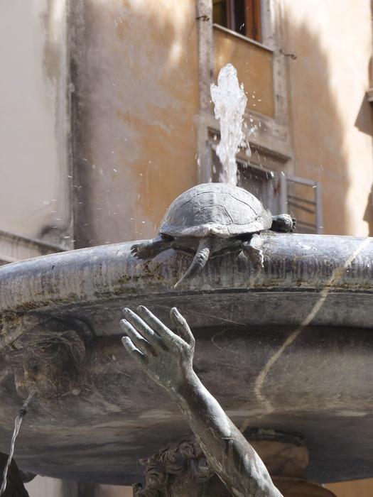 Fontana Delle Tatarughe 7