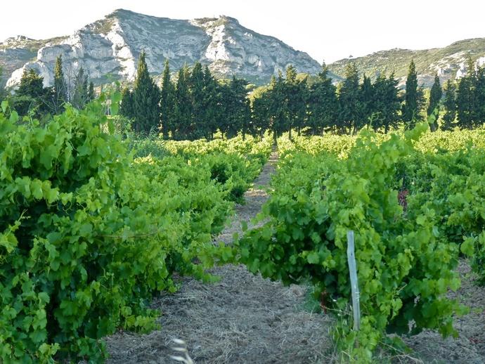 Landscape Les Alpilles 2