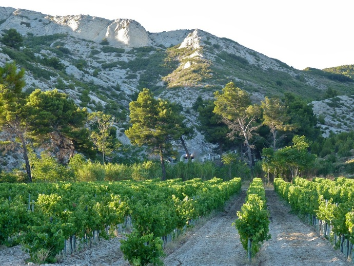 Landscape Les Alpilles 3