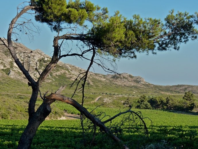 Landscape Les Alpilles 5