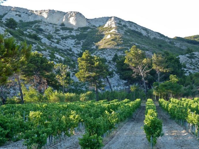 Landscape Les Alpilles 7