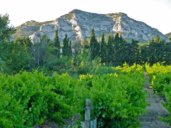 Landscape Les Alpilles 8