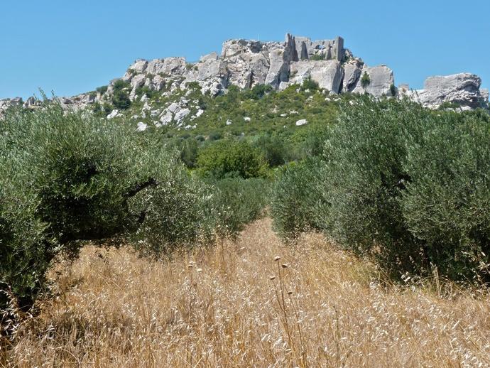 Les Baux Olive Groves