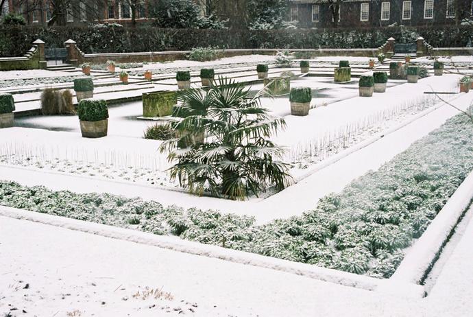 Dutch Garden 3