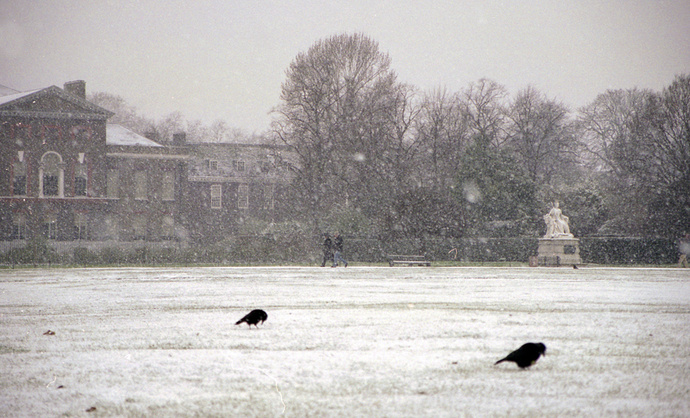 Kensington Palace & Crows