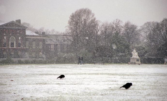 Kensington Palace & Crows