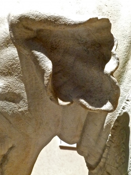 L'elefantino di Bernini 14