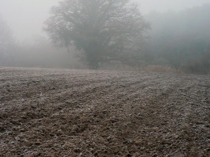 Topfield Frost